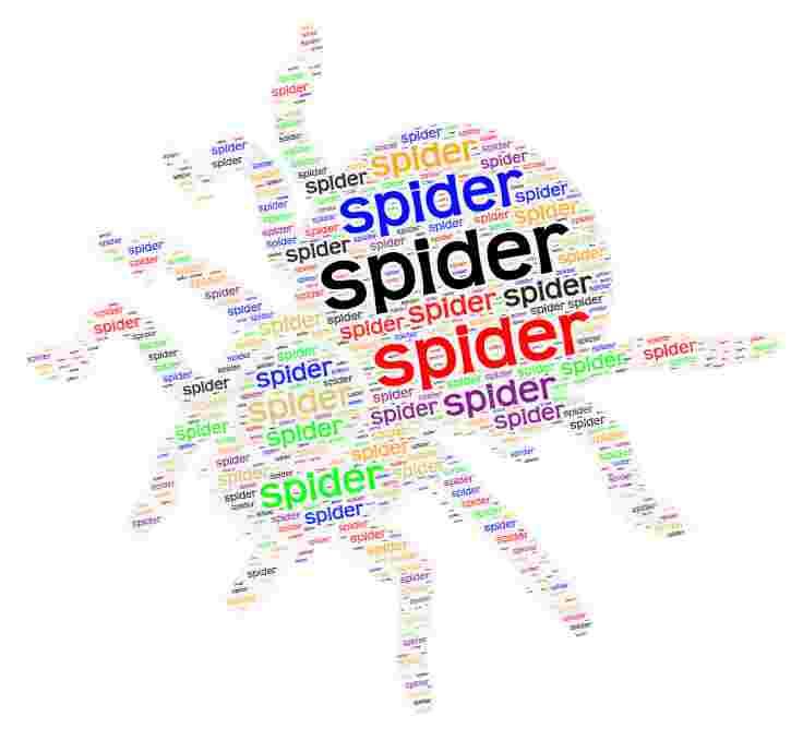 2.10 Animals - Spider